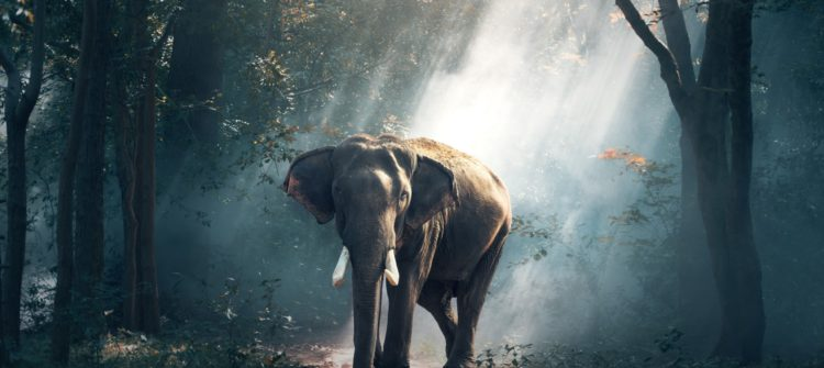 animal-photography-daylight-elephant-247431